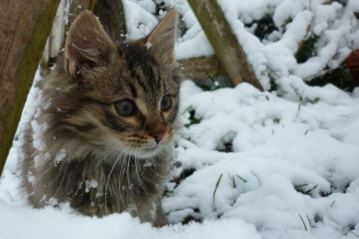 A hó, avagy az első találkozás
