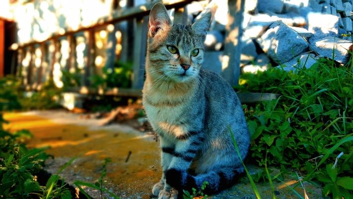 Fél órán át pózoló macska :)