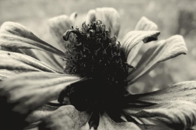 A romlás virága
