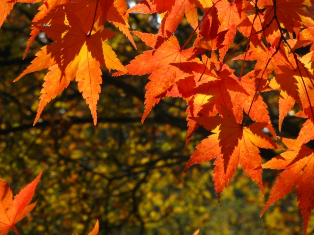 Vácrátót ősszel