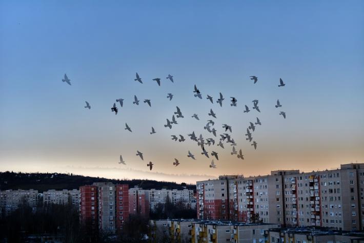 Békásmegyer galambok