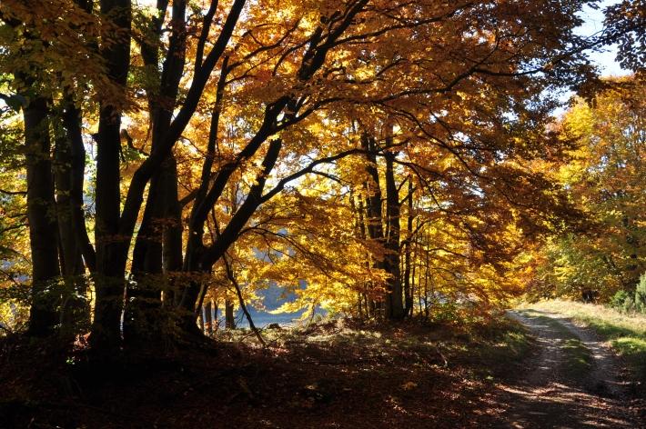Aranyszínű erdő